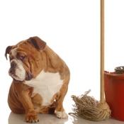 Nettoyer des excréments d'animaux sur du lino