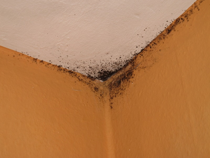 Comment enlever des taches d'humidité sur les murs
