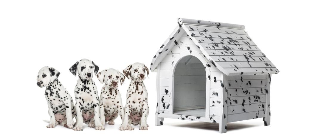 d caper la peinture d 39 une niche pour chien les astucieux. Black Bedroom Furniture Sets. Home Design Ideas