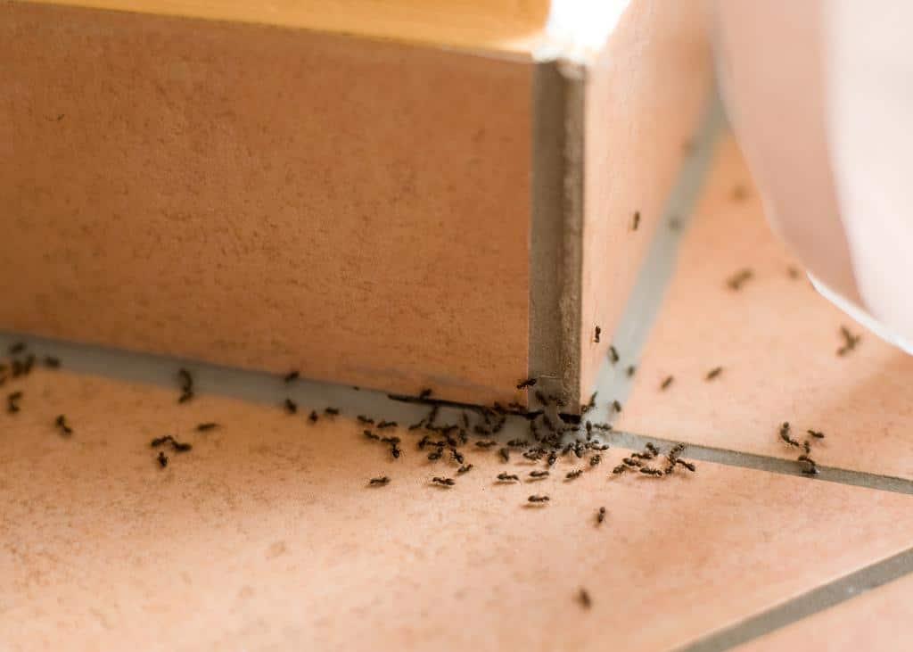 astuce rapide comment loigner les fourmis de votre habitation les astucieux. Black Bedroom Furniture Sets. Home Design Ideas