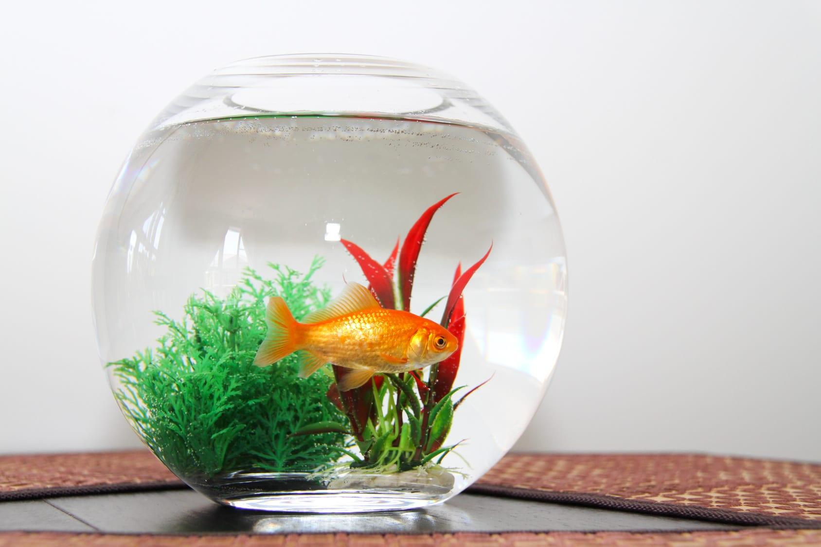 Comment nettoyer un aquarium ? - Les Astucieux